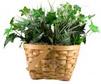 Imitation Plant Nanny Cam